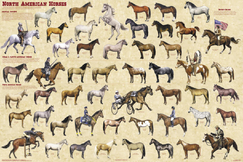 North American Horse Breeds Poster