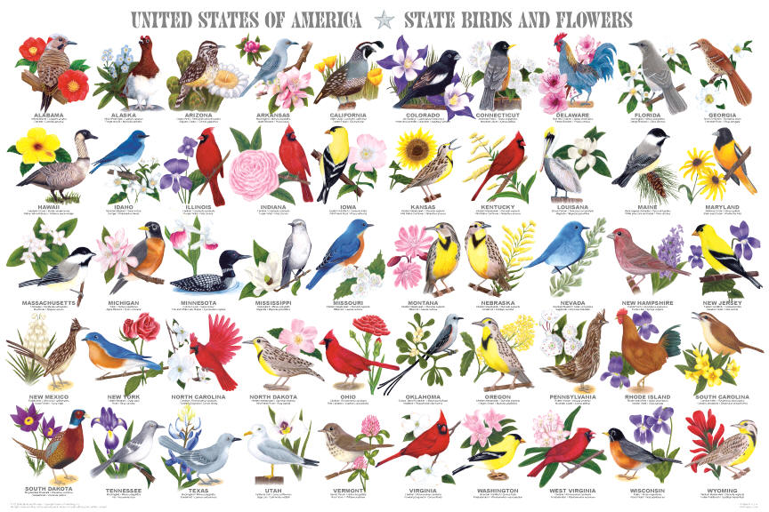 This Magnificent Poster Shows The State Birds And Flowers From All 50 States They Are Presented Alphabet Ically Each Images Is Accompanied By Both