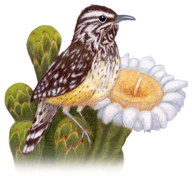 arizona state bird and flower