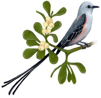 ... Oklahoma State Bird and Flower