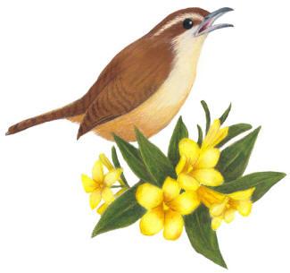 state birds and flowers new mexico thru south carolina